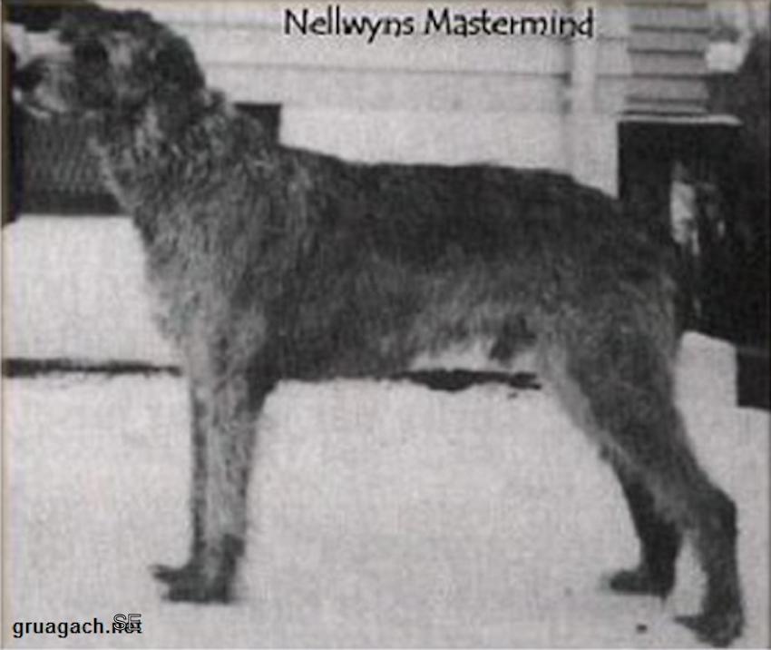 Nellwyns Mastermind